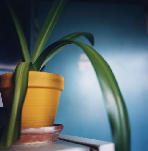 http://kristofguez.com/files/gimgs/th-36_36_plante-verte.jpg